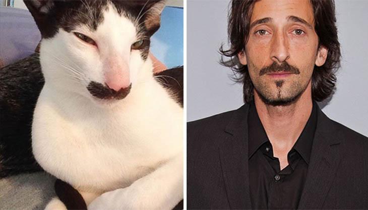 Adrien Brody Copycat Stache The Cat