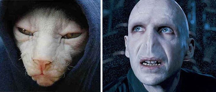Voldemort Copycat Cat