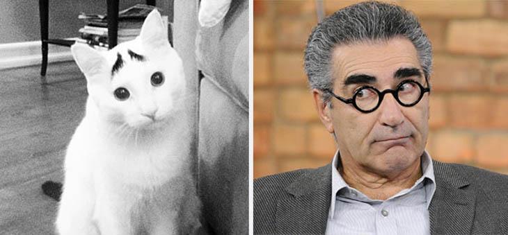 Eugene Levy Copycat Sam The Cat
