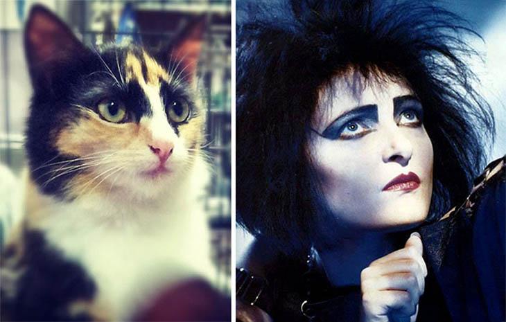 Gothic Chic Copycat Cats