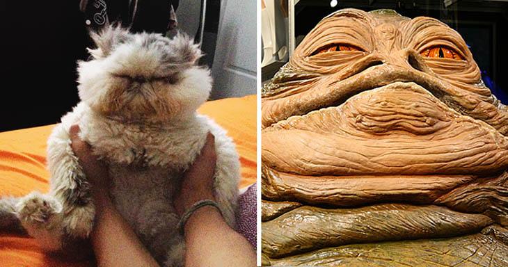 Jabba The Hutt Copycat Cat