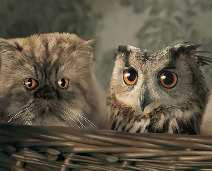 Owl Copycat Cat