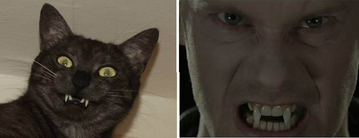 Vampire From True Blood Copycat Cats