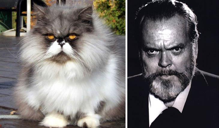 Orson Welles Copycat Cat