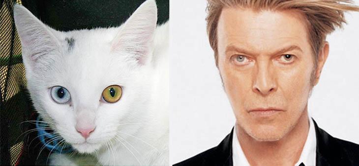 David Bowie Copycat Cat