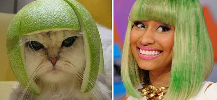 Nicky Minaj Copycat Cat With Pomelo Hat