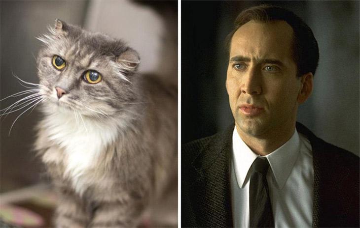 Nicolas Cage Copycat Cats