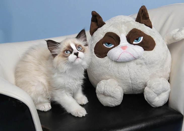 Grumpy Cat's Toy Copycat Cats