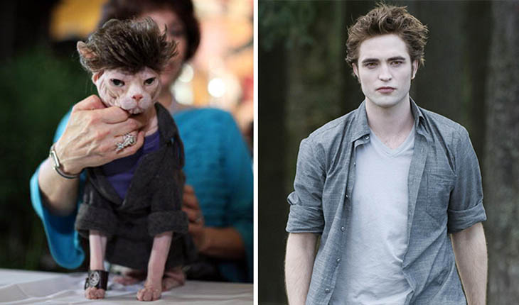 Edward Copycat Cat