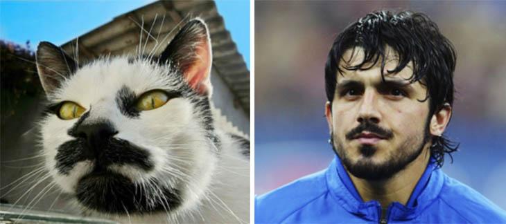 Gennaro Gattuso Copycat Cats