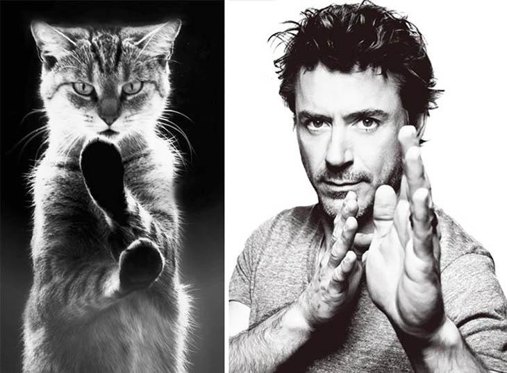 Robert Downey, Jr. Copycat Karate Cat