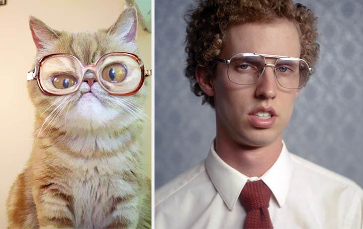 Napoleon Dynamite Copycat Cats