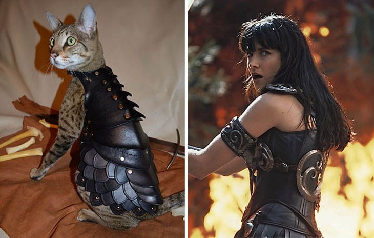 Xena, Warrior Princess Copycat Cat
