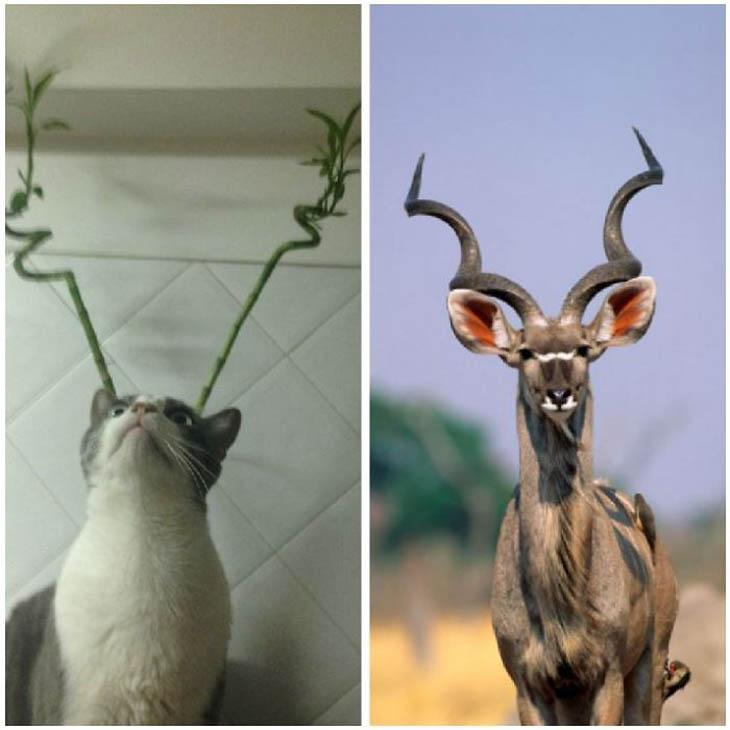 Kudu Copycat Cat
