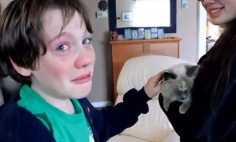 Mom Finds The Missing Cat, Kid's Tears Of Joy Will Melt Your Heart.
