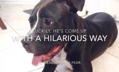 It's Not That Hard To Overcome Your Fears… Look At This Inspirational Dog!