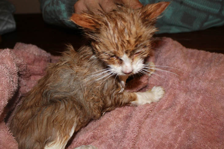 Both kitties got a bath. When they were wet, you could see how malnourished and skinny they were.
