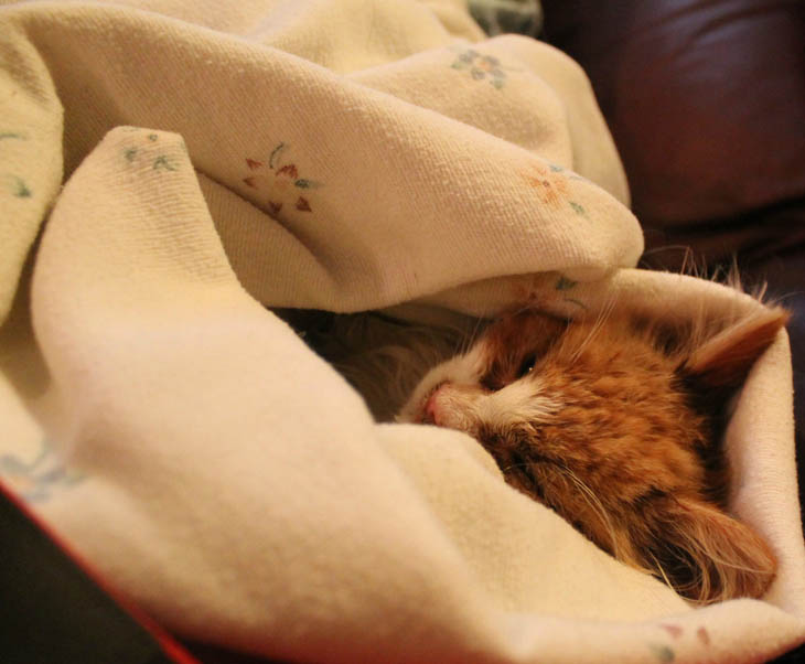 They were both wrapped in blankets and nuzzled for body warmth.