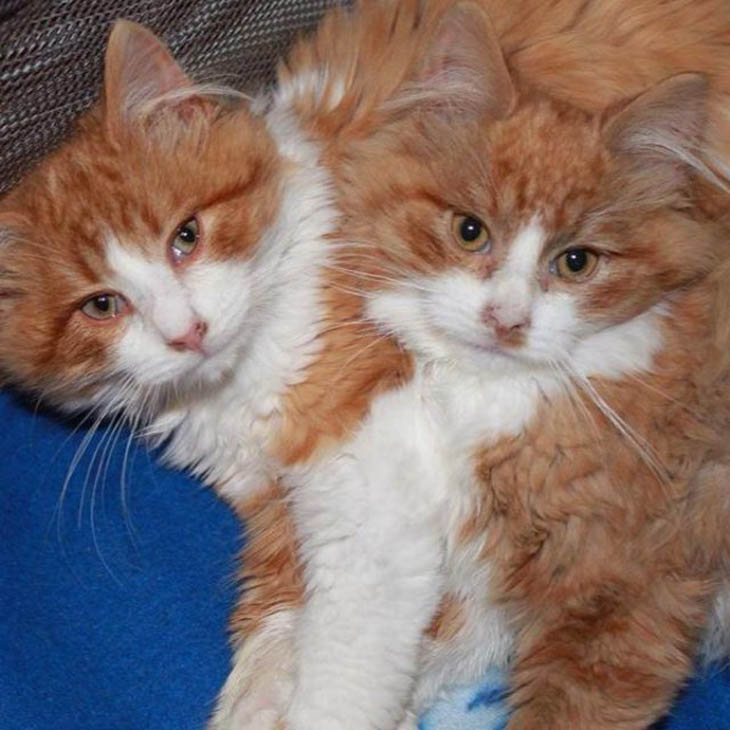 All in all, they're two very happy and healthy cats thanks to the love of some very kind folks.