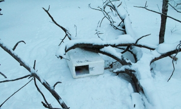 He Finds A Box Hidden In The Snow. What's Inside Will Melt Your Heart!