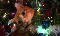 Don't Tell Santa, But These Cats Just Ruined Christmas….And They Made Me Laugh.
