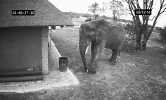 This Elephant Does A Thing That Most Of Us Forget To Do Every Single Day.