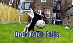 The Most Hilarious Dog Fetch Fails Of All Time. You Won't Stop Laughing!
