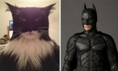 These Copycat Cats Turned Themselves Into Other Things… And It Looks Hilarious!!