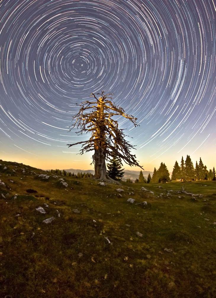 Orbital Motion Dead Tree
