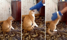 Don't Underestimate Your Pet. They Are Pretty Good In Taking Revenge. So UNEXPECTED!
