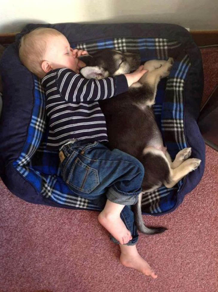 Napping In The Dog Bed