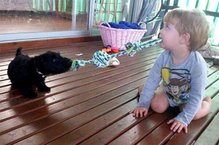Tug-O-War Playing Puppies