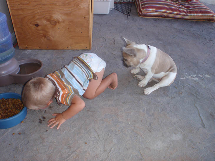 Cute Kids Act Like Animals- Dogs Eating Lunch One By One