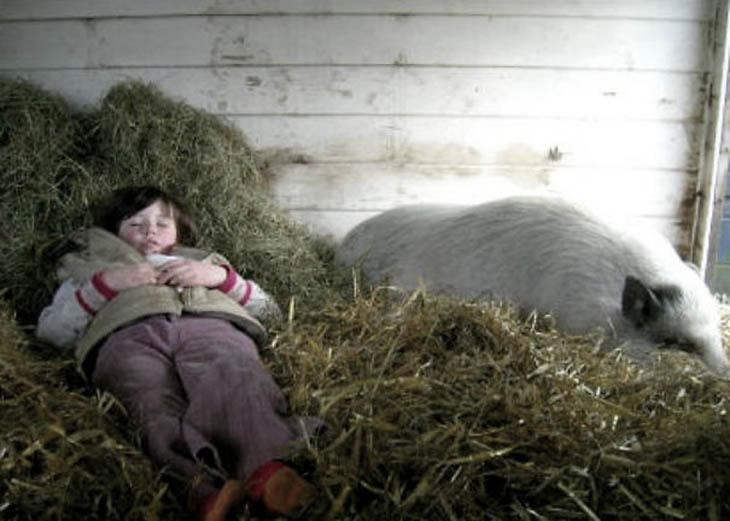 Sleeping Like A Pig