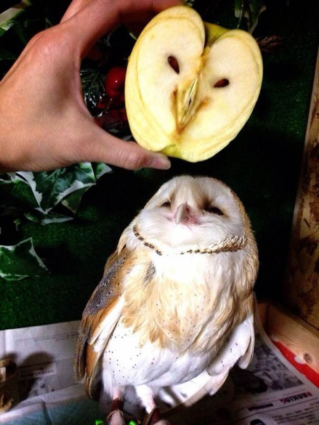 Everyday things with faces - pareidolia - Owl with Apple owl.