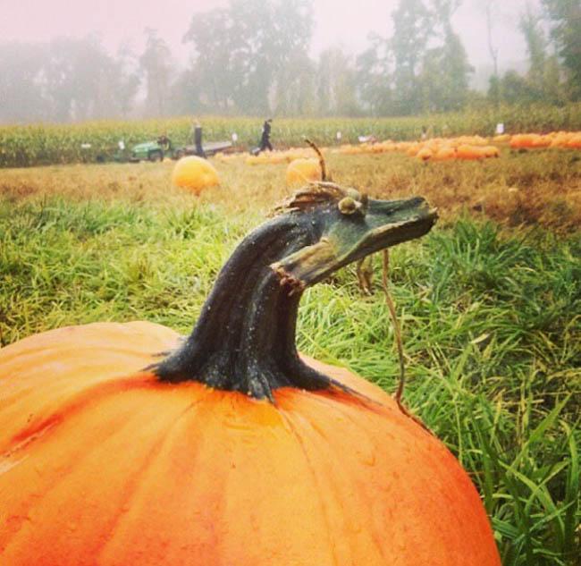 Pumpkin Stem Looks Like A Dragon!