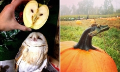 These 45 Everyday Things With Faces Are Prefect Examples Of Pareidolia.