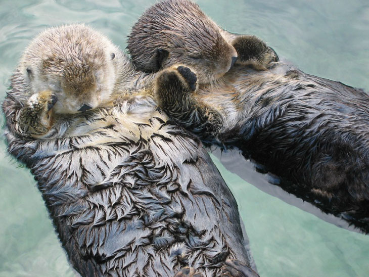 Otters are lovers at heart.