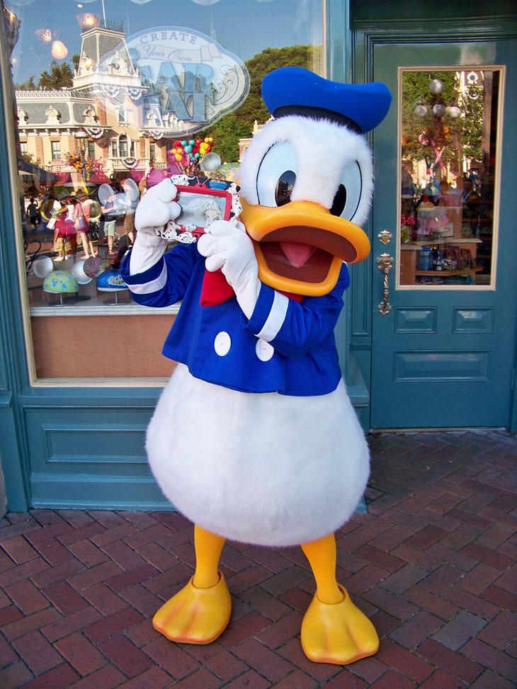 Weird urban myths -  Donald Duck is the world's most modest nudist.