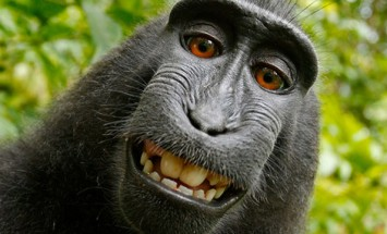 35 Extremely Hilarious Photogenic Animals Posing For Camera! #19 Looks Familiar!