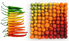 These Are The Most Satisfying Arrangements Of Natural Food and Objects You've Ever Seen.