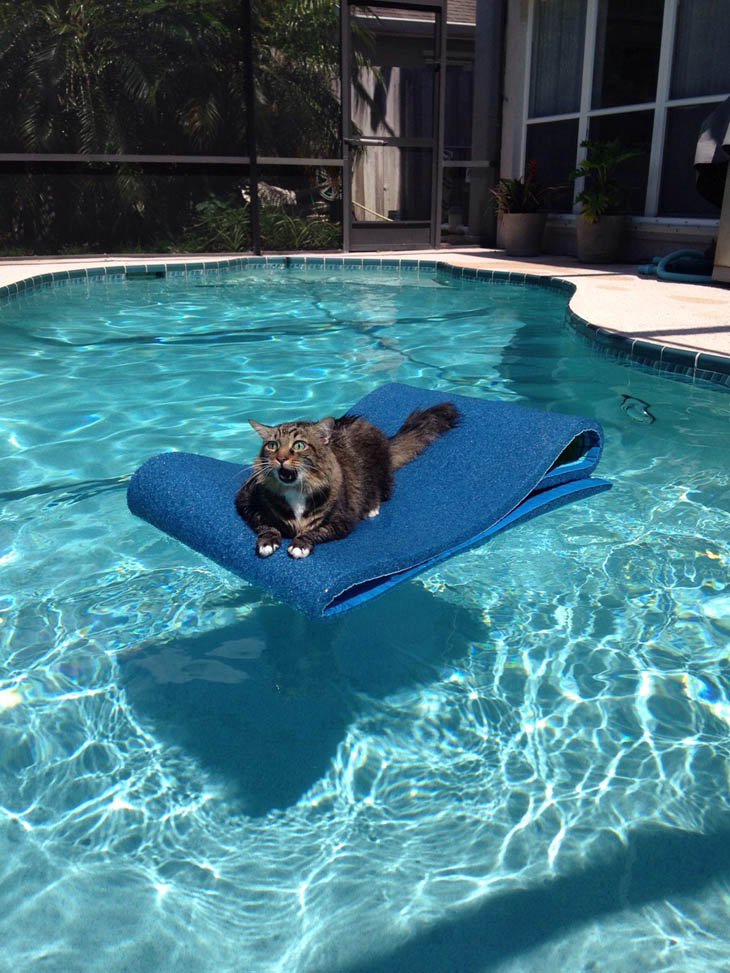 This is my pool now!