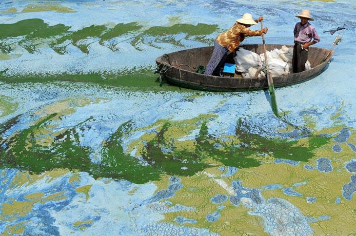 Fishermen row a boat in the algae-filled Chaohu Lake, China.