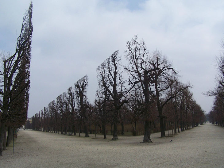 Don't confuse it with a scene from a sci-fi film, but they are actually real trees.