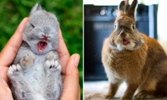 35 Of The Cutest Bunny Rabbits Ever. #19 Is Cuteness Overload!