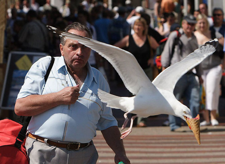 Most Unexpected Perfectly Time Photos