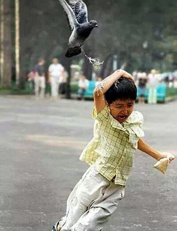 The boy who got just a little too close to this pigeon.