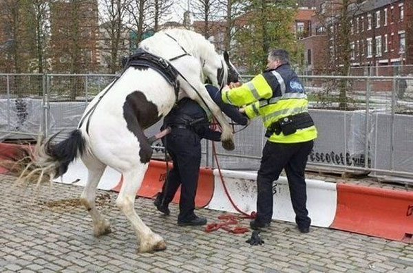 The police officer whose horse turned on him.