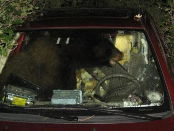 The bear who made your car a home.