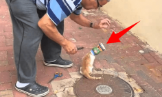 Rescuing A Cat Stuck In A Can Makes Me Laugh. Is It OK? Watch And Decide!